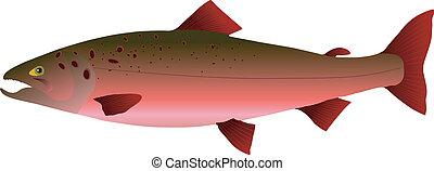vectors, salmon