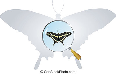 vectors swallowtail under magnifier