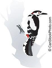 woodpecker - vectors woodpecker