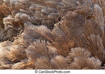veertjes, struisvogel