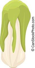 Vegan cabbage icon, isometric style
