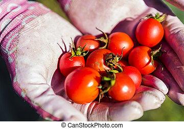 Vegatable garden - Late summer in organic community...