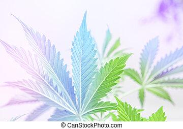 vegetação, cbd, indica, marijuana, vazamentos, cannabis, folhas, cannabis, cultivo, indoor, fundo, plantas, luz, luz, cânhamo, legalization, crescer, branca