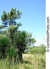 vegetação, uruguai