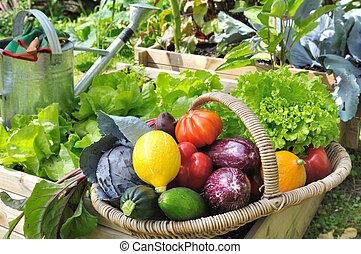 vegetable basket in garden