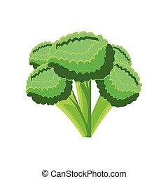 vegetable broccoli on white background