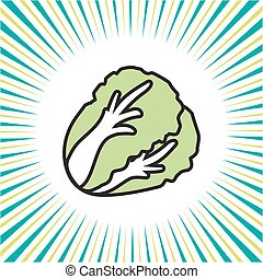 Vegetable cabbage and lettuce ,vector icon