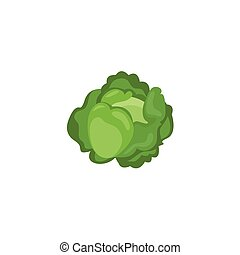 Vegetable - Cabbage