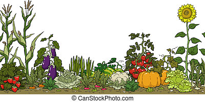 Vegetable garden bed on a white background vector ...