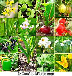 vegetable garden collection