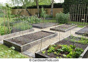 Vegetable garden, growing vegetables, UK