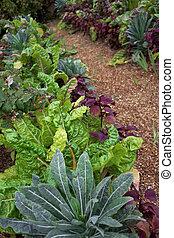 Vegetable garden in a park