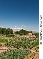 Vegetable garden in France