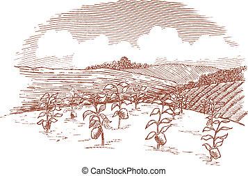Vegetable Garden Landscape