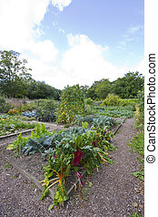 vegetable garden patch with rhubarb in the foreground