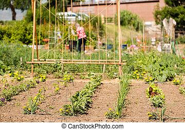 Vegetable garden - Small community vegetable garden in urban...