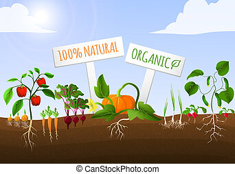 Vegetable food garden poster of natural organic carrot pepper onion cucumber planted in the ground vector illustration