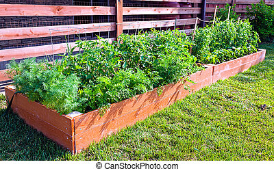 Small vegetable garden by the side of the house
