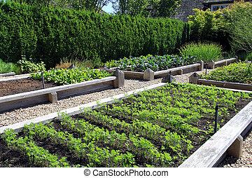Vegetable garden - Community raised vegetable garden boxes....