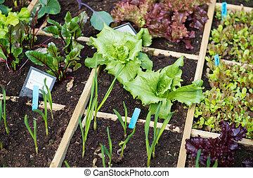 Vegetable garden with assortiment vegetables