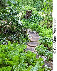 Vegetable garden with assortment vegetables