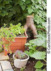 vegetable garden with plants