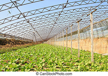 vegetable greenhouse interior landscape