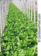 vegetable greenhouse interior landscape