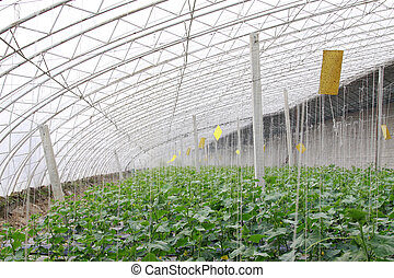vegetable greenhouse internal landscape