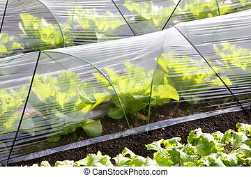 close up of agricultural greenhouse for farming of vegetables