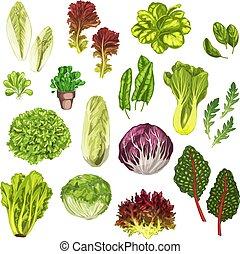 Vegetable greens, salad leaf, herbs watercolor set -...
