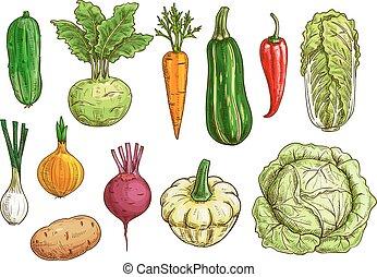 Vegetable isolated sketch set. Fresh organic pepper, carrot, onion, beet, potato, cabbage, cucumber, zucchini, kohlrabi, pattypan squash veggies. Food themes, vegetarian menu, farm market design