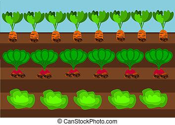 Vegetable path - Vegetables growing on path under blue sky