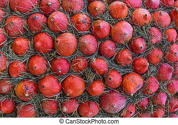 vegetable pattern of a lot of orange mini pumpkins and hay rustic design basis
