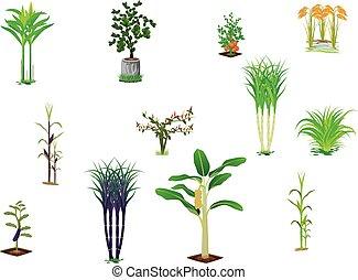 vegetable plant on white background
