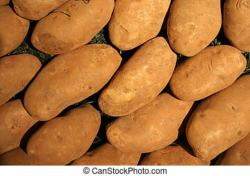 Vegetable - Potato - potato in the middle of many potatoes
