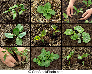 seedlings collection - vegetable seedlings collection