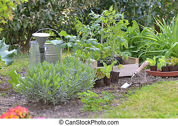 vegetable seedlings in a garden to planting