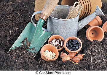 vegetable seeds for sowing - seeds in pot with gardening...