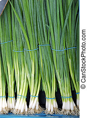 Vegetable, spring onion - Fresh healthy vegetables for sale...