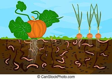 vegetable., suolo, cutaway, lombrichi