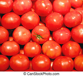 Vegetable - Tomato - tomato in the middle of many tomatoes