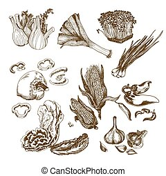 Vegetables collection. Set of hand drawn graphic...