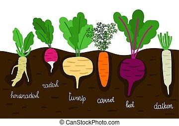 Vegetables garden growing. Vegetable gardening with roots in...