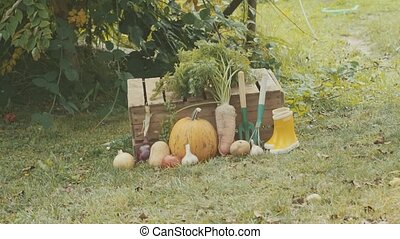 Vegetables, garden tools and wellies in the garden. -...