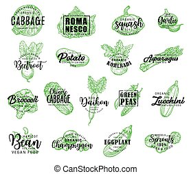 Vegetables, greenery and salads vector lettering -...