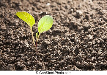 vegetables growing out of soil