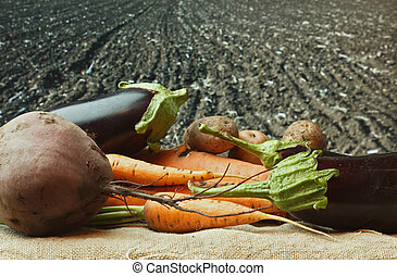 vegetables  on the background of agricultural lands
