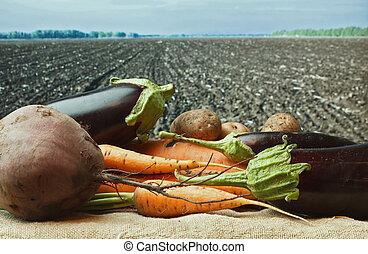 vegetables  on the background of agricultural lands