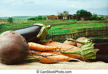 vegetables on the background of rural areas